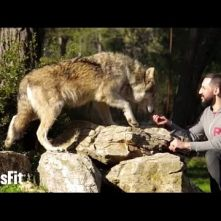 Our Wolf Pack on crossfit.com